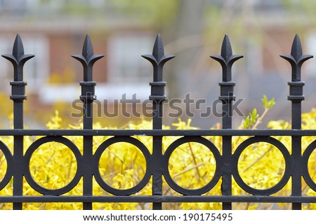 Iron fence detail, spears and rings pattern, forsythia flowers in background - stock photo