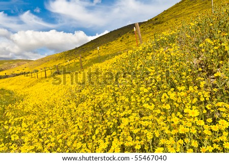 Iron fence in the field of Yellow flowers with Cloudy blue sky - stock photo