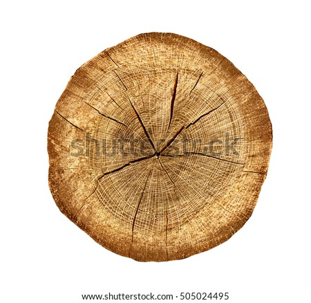 Irregular Cross Section Of A Cut Wood Tree Trunk Slice With Cracks And Rings