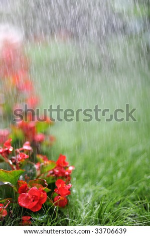 irrigated flowers - stock photo