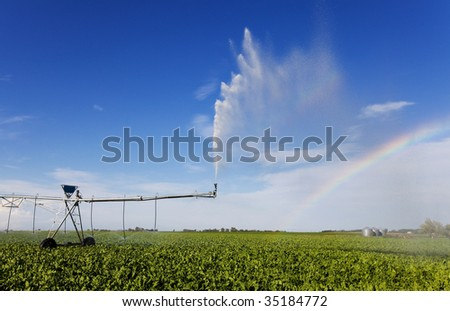 irrigating a turnip field with a rainbow - stock photo