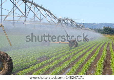 Irrigating newly planted corn using a center pivot system in the Willamette Valley of Oregon - stock photo