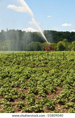 Irrigating Potato Plants in Field - stock photo