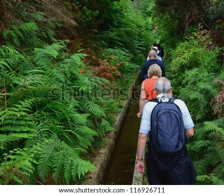 Irrigation canal levada in laurel forest, Madeira Island, Portugal - stock photo