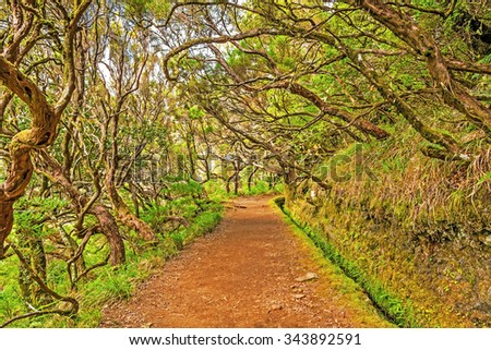 "Irrigation canal ""levada"" in magical forest, Madeira Island, Portugal  - stock photo"