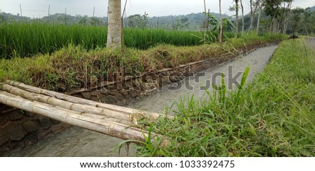 irrigation channel on the edge of rice fields with bamboo bridge