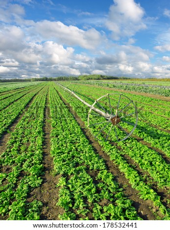 irrigation equipment and green rows on field - stock photo