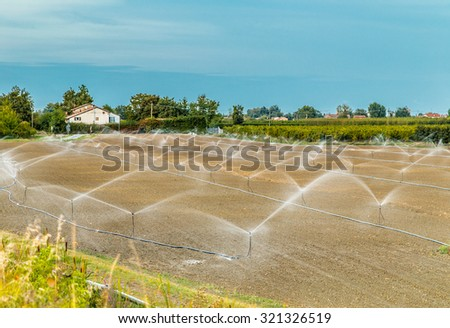 Irrigation of plowed and sown agricultural field with sprinklers