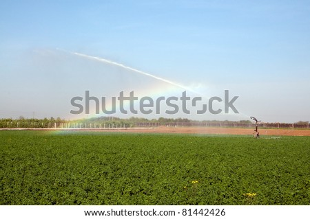 Irrigation on a wheat field, Italy, Europe - stock photo