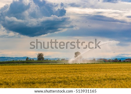 irrigation on wheat fields in Italian countryside