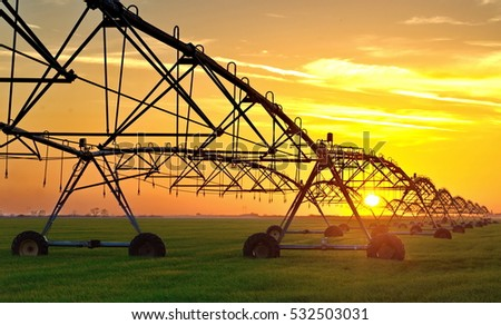 Irrigation pivot system on the wheat field at sunset