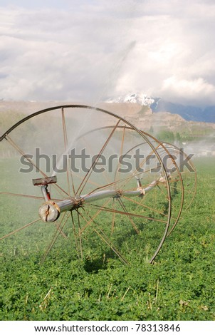 Irrigation sprinkler wheel line watering a green alfalfa field. - stock photo