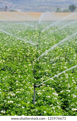 Irrigation sprinklers in a farm field (Spain)   - stock photo