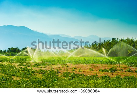 Irrigation sprinklers in a vegetable producing farm during a hot summer morning - stock photo