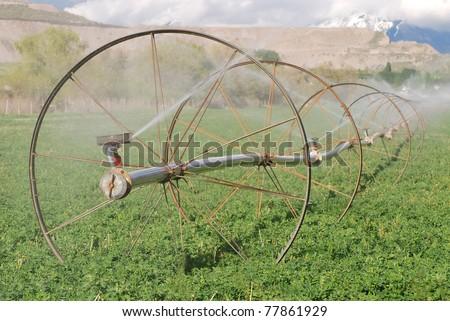 Irrigation sprinklers on wheel lines watering an alfalfa field. - stock photo