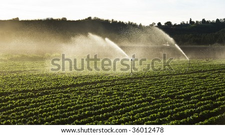 Irrigation sprinklers water a farm field against late afternoon sun - stock photo