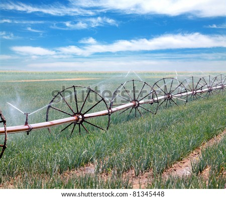 Irrigation system for water supply in onion  field - stock photo