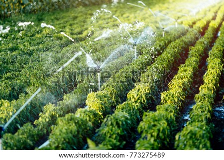 Irrigation system in function