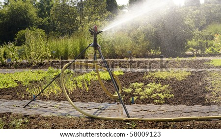 Irrigation system, watering in the garden. Lawn sprinkler spraying water over vegetable patch - stock photo