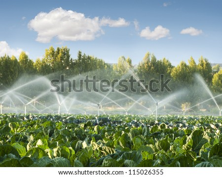 Irrigation systems in a green vegetable garden - stock photo