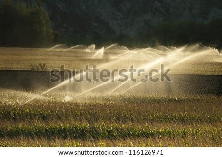 Irrigation systems on sunset. Corn plantation - stock photo