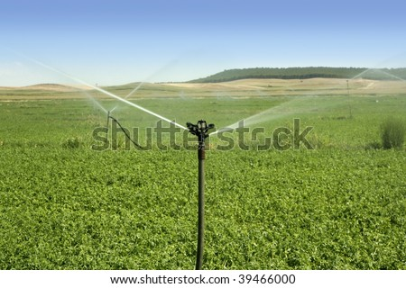 Irrigation vegetables field with turning sprinkler water - stock photo