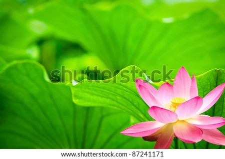 Is a brightly colored flowers in full bloom - stock photo