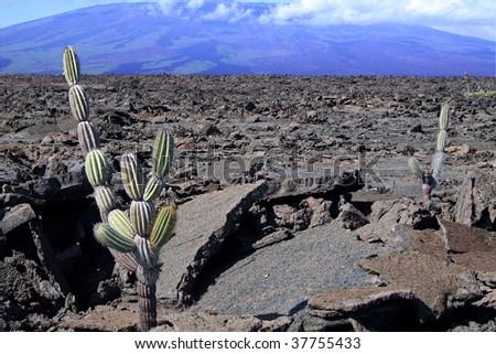 Isabela Island lava landscape, Galapagos - stock photo