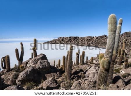 Isla de Pescadores, Salt lake Uyuni in Bolivia - stock photo