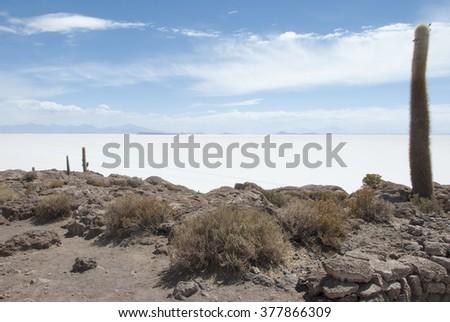 Isla del Pescado, Salar de Uyuni, Bolivia.  - stock photo