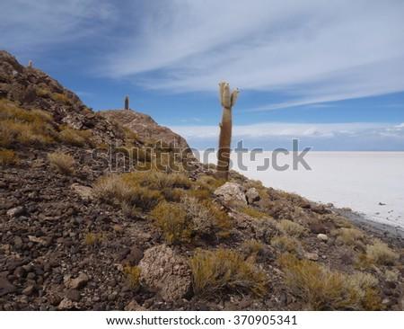 isla del pescador at salar de uyuni in bolivia - stock photo