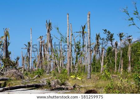 Island Malapascua after Super Typhoon Yolanda / Haiyan in the Philippines with horrible destruction - stock photo