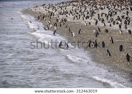 Island of Penguins in the Beagle Channel, Ushuaia, Argentina - stock photo