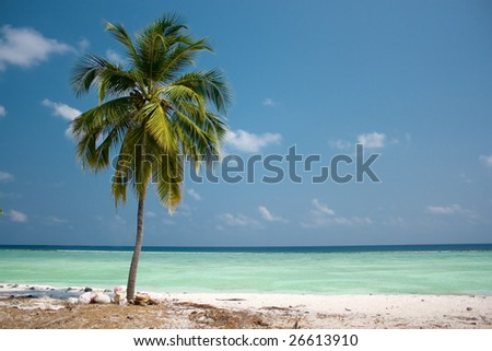 Island Paradise - Palm tree hanging over a sandy white beach with stunning turquoise waters - stock photo