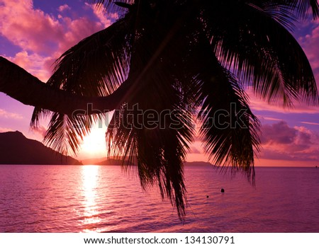Island Tree Fantasy - stock photo