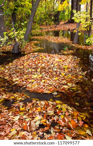 Islands of Leaves Surrounded by Water