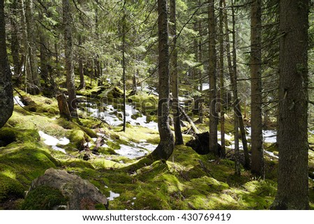 Islands of snow in green forest illuminated with sun - stock photo