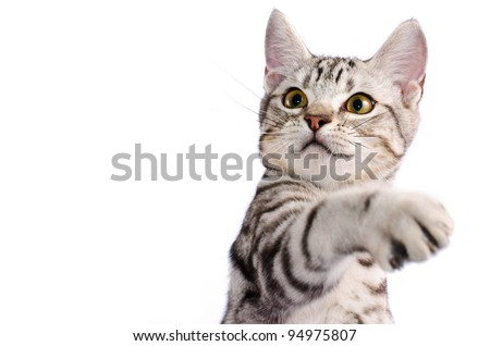 isolate cat scratch on white background