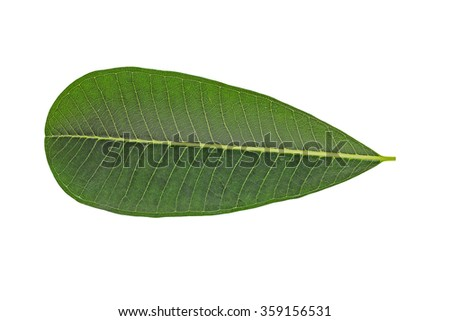 Isolate fresh green leaf on white background, texture concept
