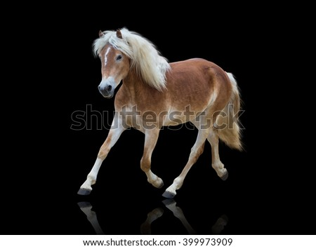 isolate of a yellow horse go on the black background