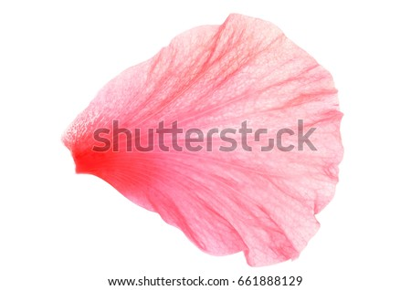 Chinese rose stock images royalty free images vectors for Individual rose petals