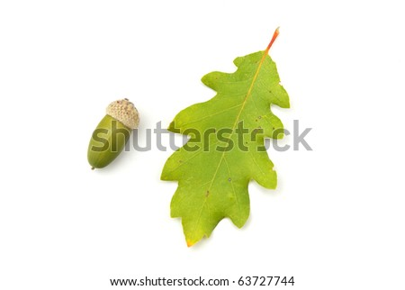 Isolated acorn. Element of design. - stock photo
