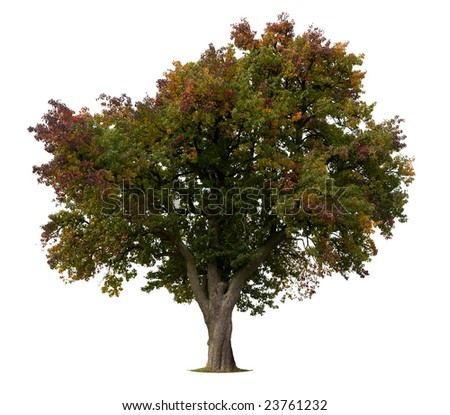 Isolated Apple Tree in early Fall - stock photo