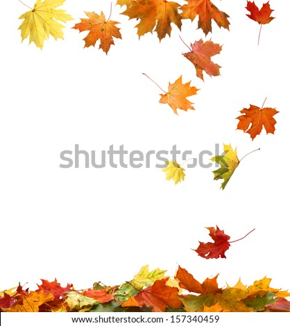 Isolated Autumn Leaves