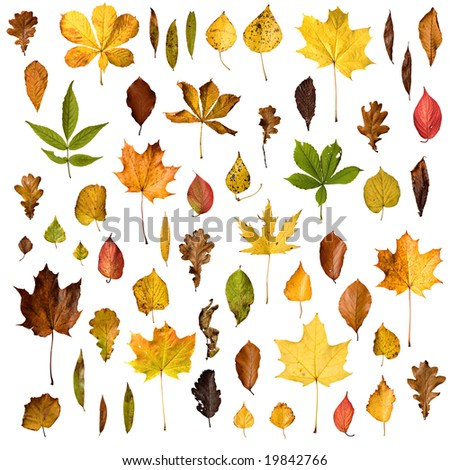 Isolated autumn leaves collection - stock photo