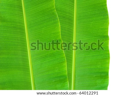 isolated banana leaf on white - stock photo