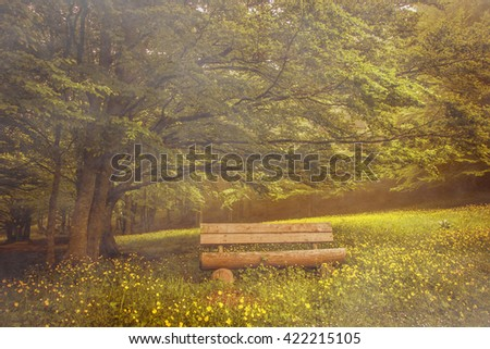 Isolated bench under beech tree branches. Panoramic view of misty wood.