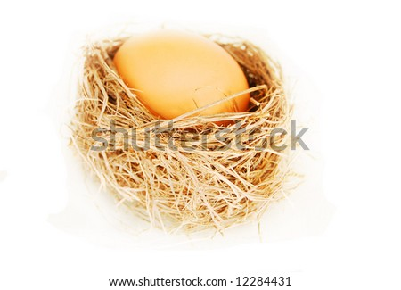 isolated bird's nest and brown egg
