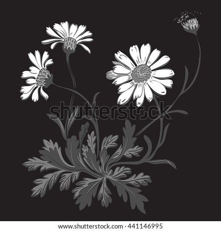 Isolated blooming meadow flower form print natural outline floral white spring ornament monochrome petal organic leaf holiday botanic summer graphic blossom drawing black daisies chamomile stem  - stock photo