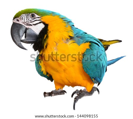 Isolated Blue and Gold Macaw on white background - stock photo